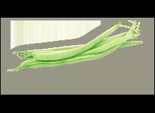 rosliny-motylkowe